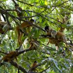Wie viele Affen sind auf diesem Foto