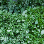 Viele Kräuter, die man dann in allen Restaurants und Imbissen in den Salaten wiederfindet